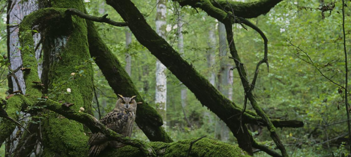 Doświadczaj podlaskiej Natury